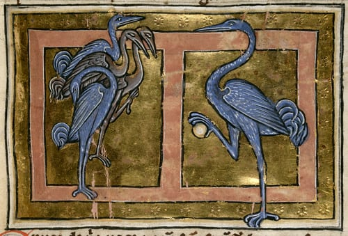 Cranes in a medieval bestiary from England, dated to first quarter of the 13th c. British Library, Royal 12 C XIX f. 40.